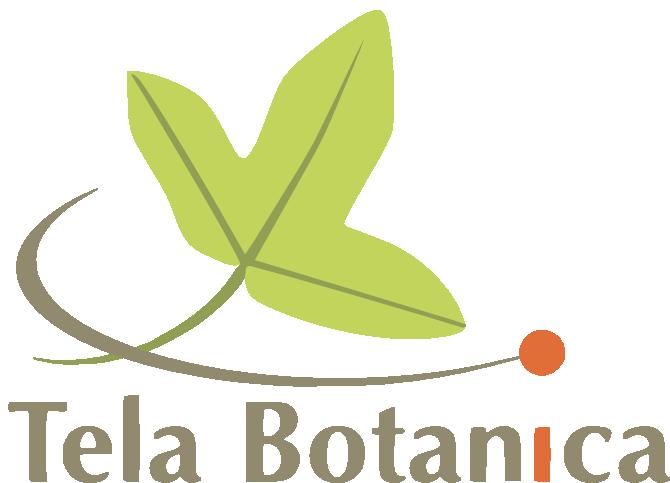 logo_tela_carre_taupe_duovert_orange_2_.png